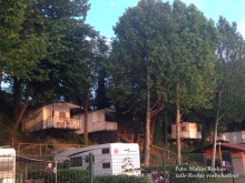 Campingplatz Cisano direkt am Gardasee.