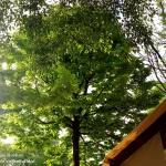 Campingplatz Cisano - überall Bäume